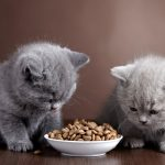 Top 10 Best Food for your Cats